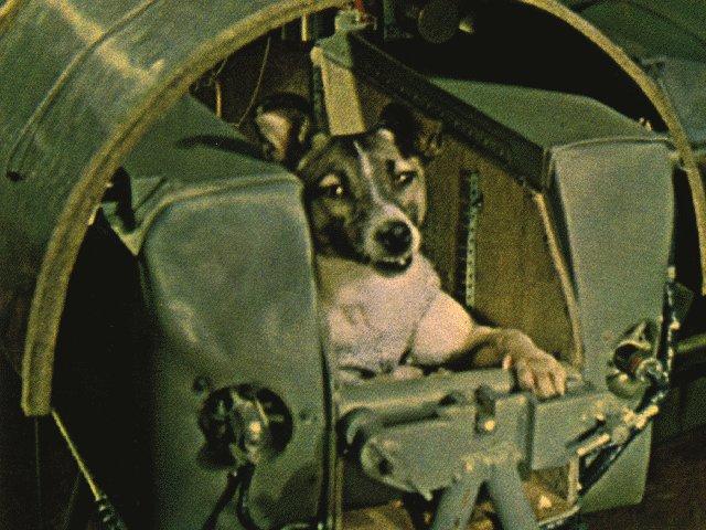Laïka - Spoutnik 2 - 3 novembre 1957 - URSS - Conquête spatiale - Dates et premières