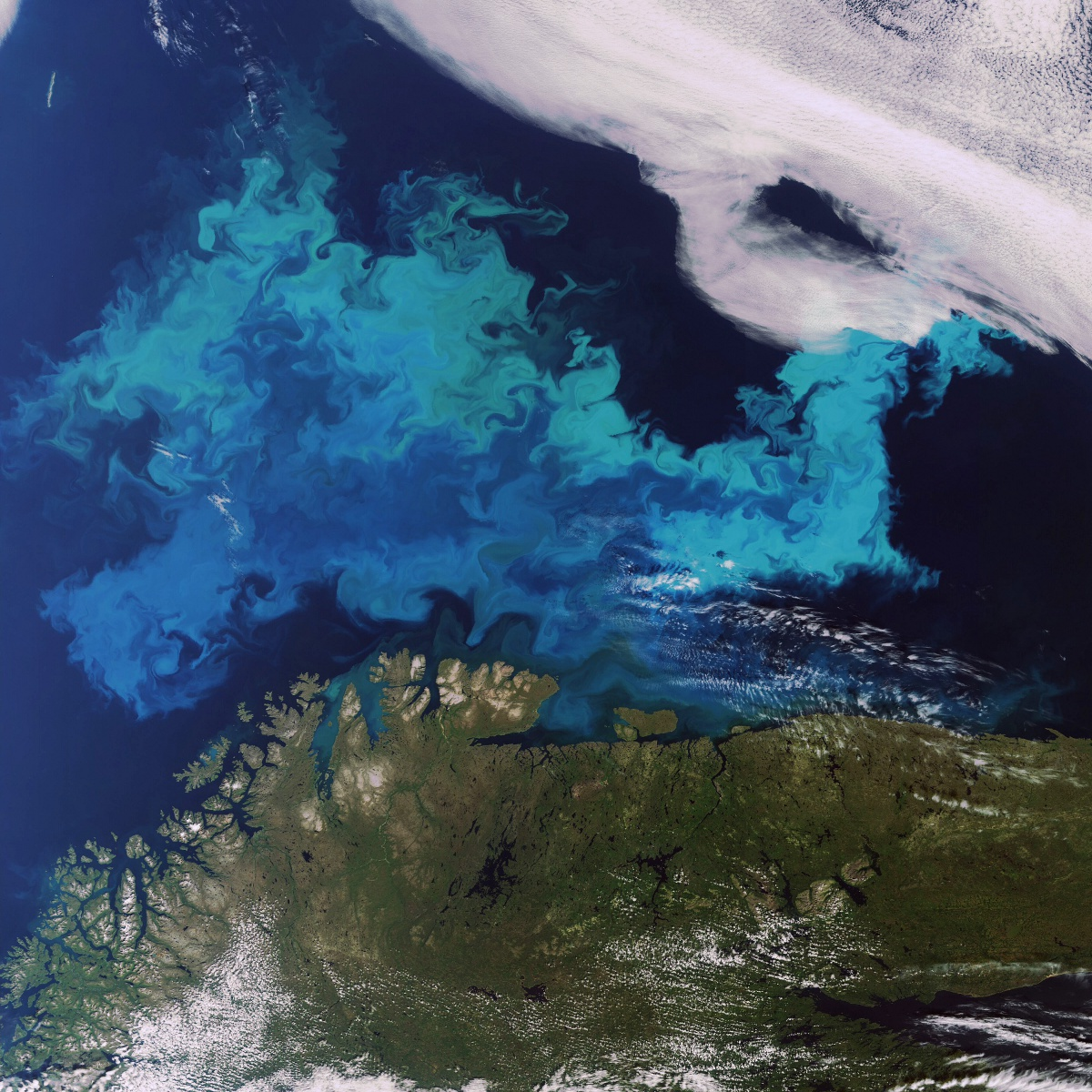 Envisat - MERIS - Algal bloom - Cap nord - ESA - Sentinel 2 - Copernicus - Coastal management - côtier