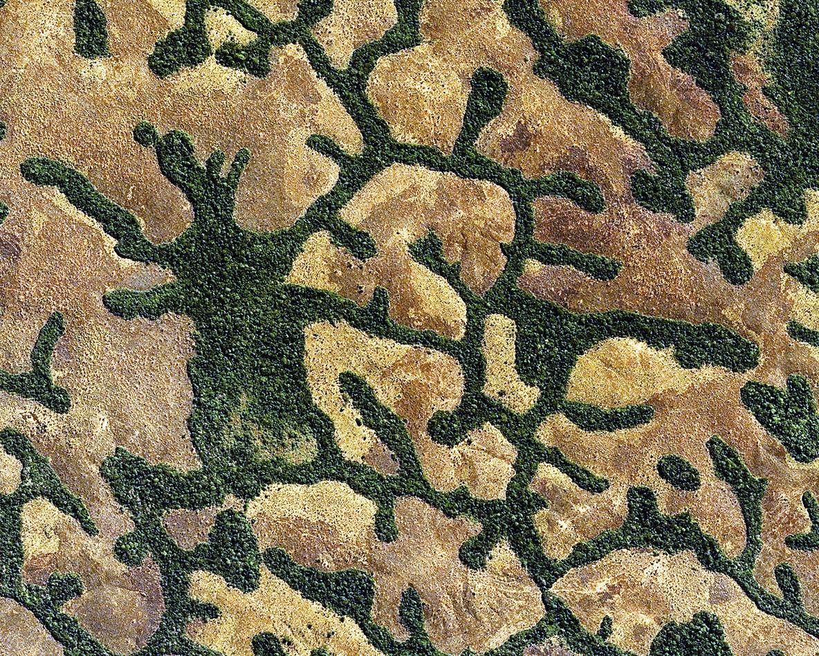 Quiz - Quizz - Satellite et environnement - Earth observation - Image mystère - Observation de la Terre - Végétation